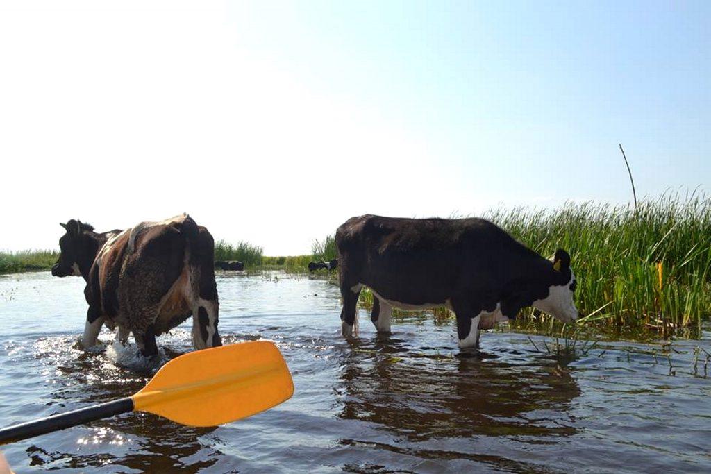 Spływ kajakowy 3 rzeki Pojezierza Augustowskiego SZOT Biebrza