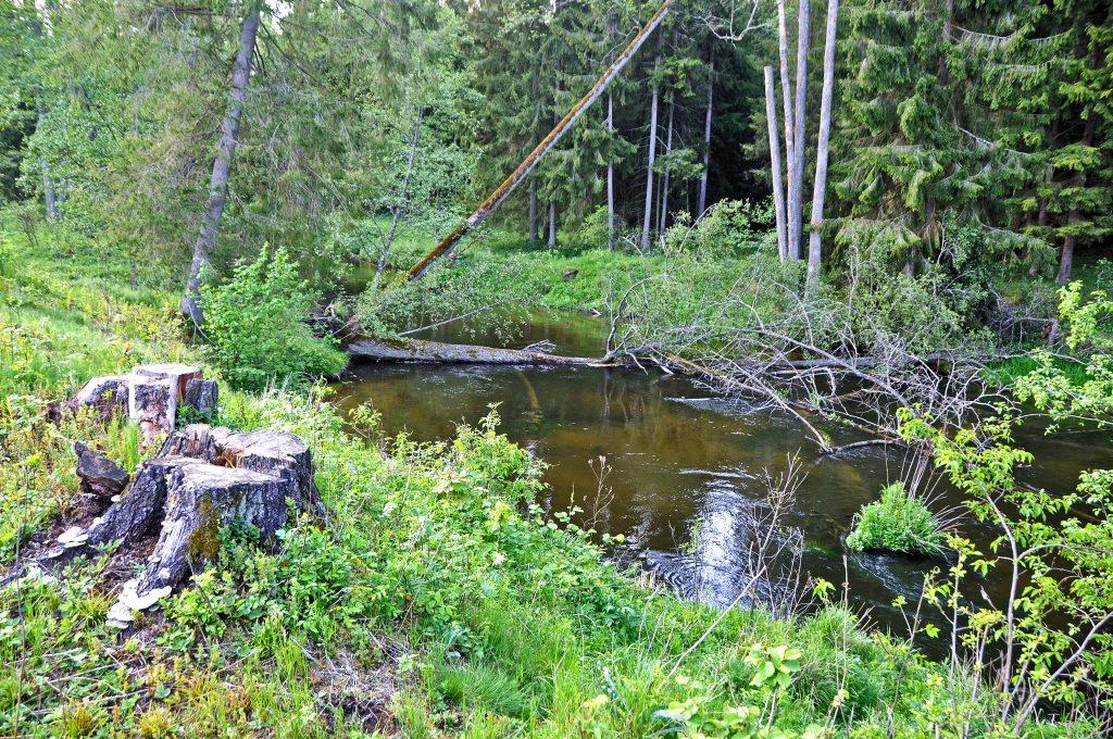 Rzeka Marycha spływ kajakowy SZOT